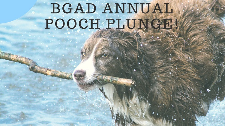 Second Annual Pooch Plunge!